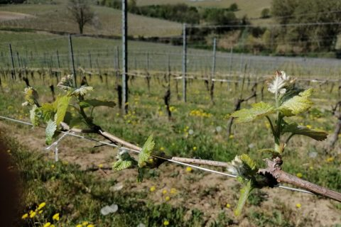 GREAT WINES ARE MADE IN THE VINEYARD 2020